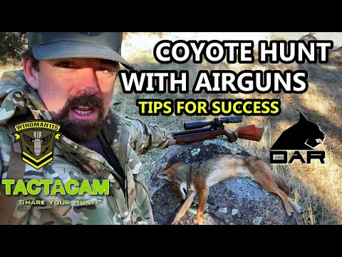 Coyote Hunt with Airguns (Tips for Success)