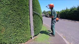 Trimming a Conifer /Leylandii Hedge