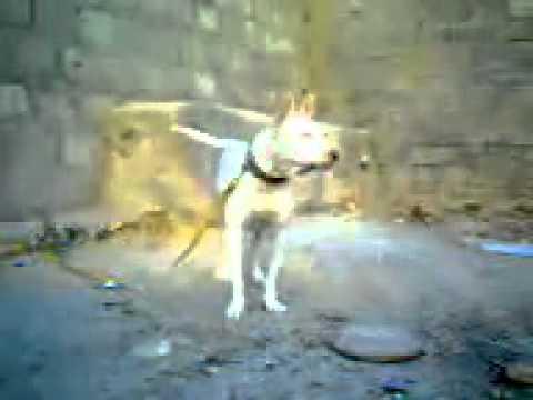 YouTube   Gulterr dog barking  noman