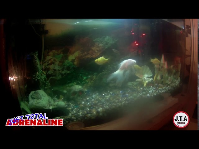 Fish Swimming - 4K Quality Video of fish swimming in our tropical tank @JTAPromos - JTAPromos.net 6