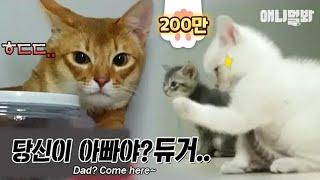 사람들이 너네 귀엽다고 난리났는데 주먹 꺼내기 있냐 ㅣ Kitten Clenches Fist When Meeting A Papa Cat For The First Time LOL