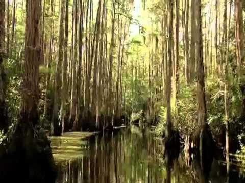 Nature's Majesty - Okefenokee Swamp.