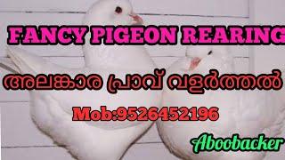 PIGEON FARM Mannarkkad,Palakkad,Kerala