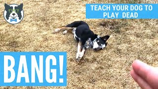 BANG: Teach Your Dog to Play Dead