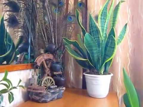 Мои комнатные растения 2 часть.