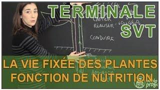 La vie fixée des plantes - Fonction de nutrition - SVT Terminale - Les Bons Profs
