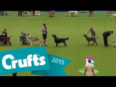 International Junior Handling Competition - Final Judging | Crufts 2015