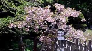 2012.5.27 新緑の赤川水源地(函館)