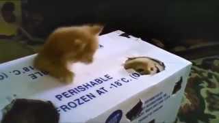 Кошки  Неудачные прыжки, падения