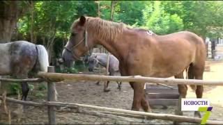Украденные лошади нашлись(Лошади Наташа и Нюша дома. Спустя полтора дня животных удалось вернуть хозяйке. Найти их помогли одесские..., 2016-06-23T17:07:35.000Z)