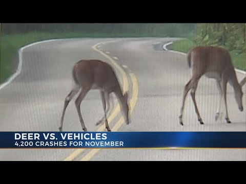 Highway Patrol warns of deer collisions