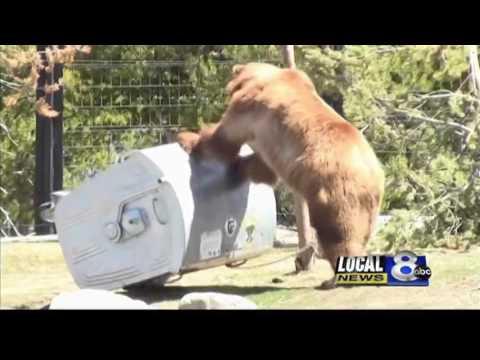 Bears in Slovakia Part 1