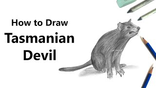 How to Draw Tasmanian devil with Pencils [Time Lapse]