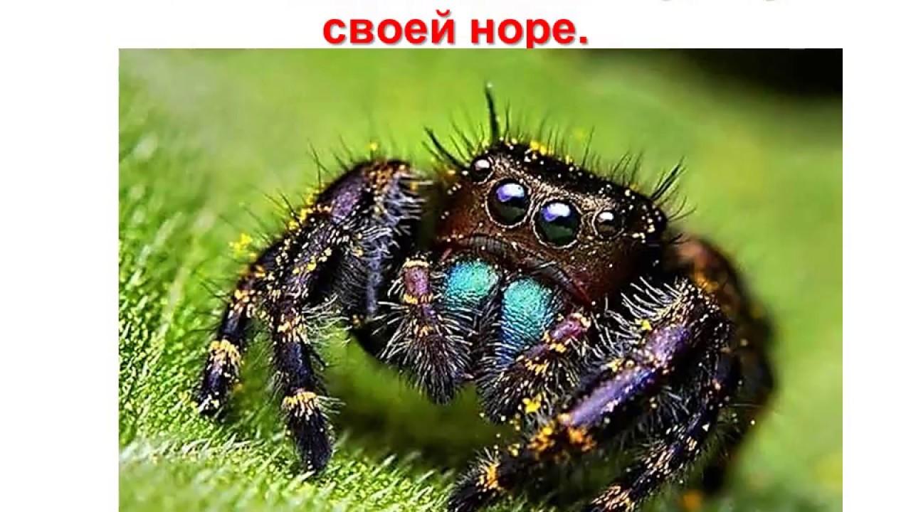 онлайн демотиваторы про паук этого