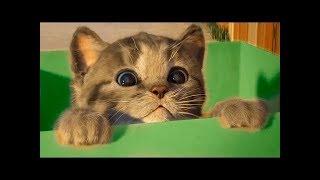 УЛЫБНИСЬ - ТОП-200 - Смешных видео с животными