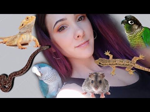 ALL OF MY PETS 2019 | Green Cheek Conure, Quaker Parrot, Bearded Dragon, And More!!