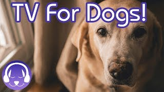 Dog TV: TV to Calm My Dog in the House! Relax Your Dog TV & Music!