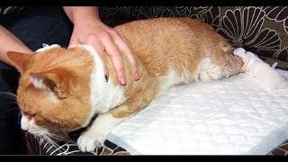 За побитого кота можуть позбавити волі на понад півроку