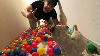 BALLS AND PUPPIES!!!