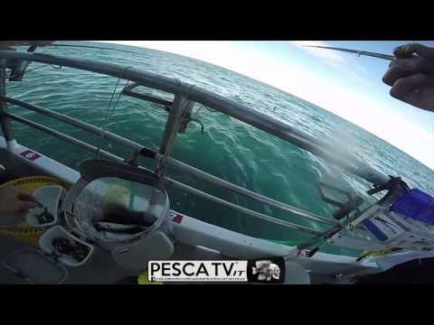 Marco Volpi Pesca da Barcone in Adriatico a Chioggia