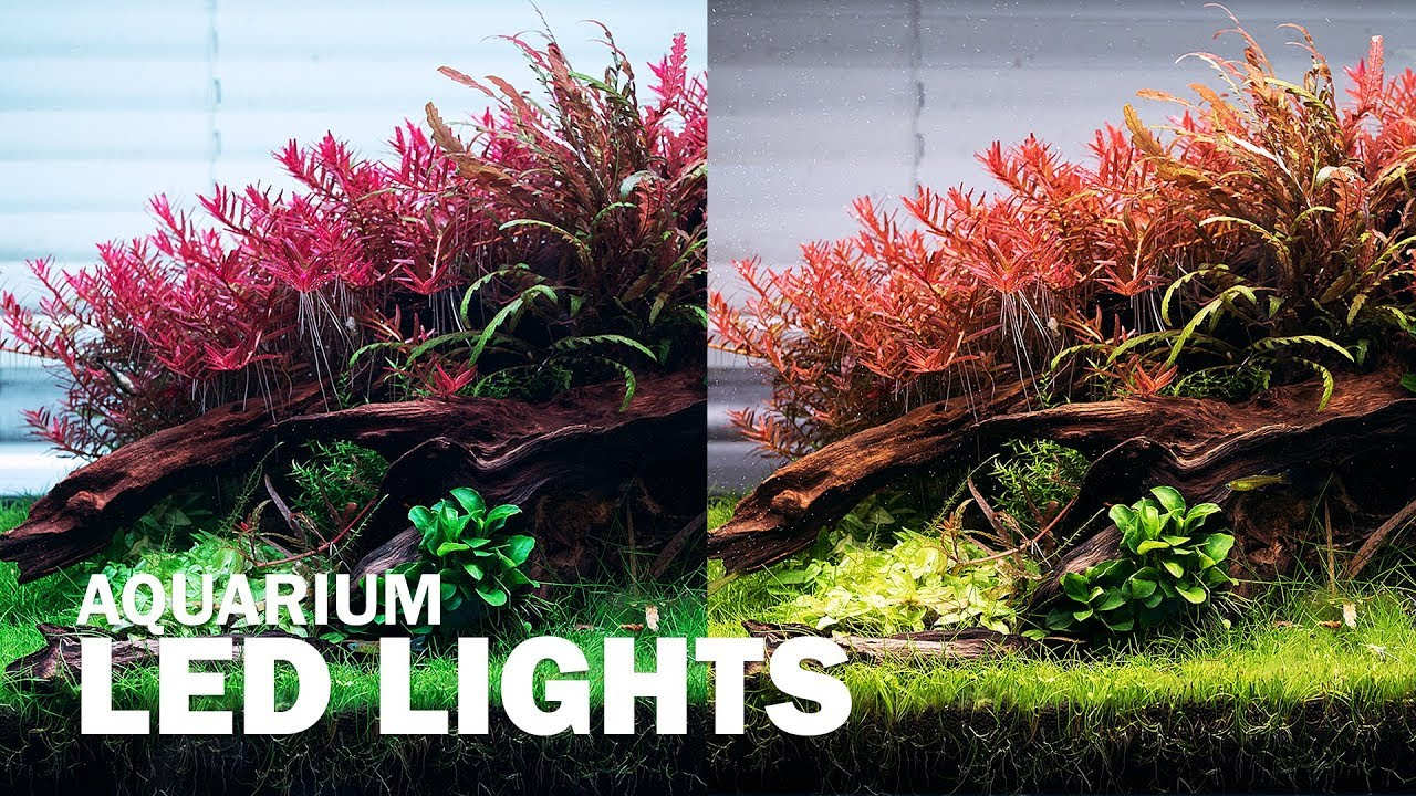 Diffe Led Lights On Our Aquascape Aquarium Lighting For Your Plants