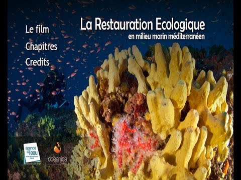La restauration écologique en milieu marin méditerranéen