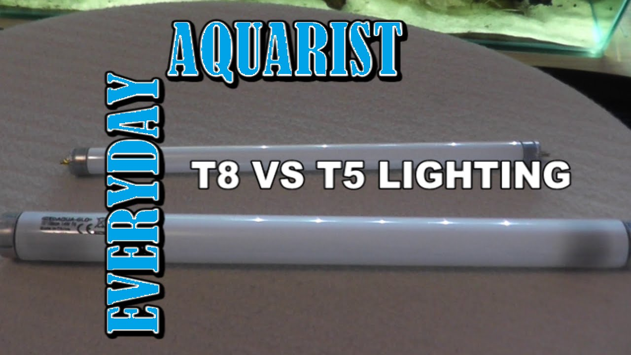 difference between t8 and t5 aquarium lighting explained youtube. Black Bedroom Furniture Sets. Home Design Ideas