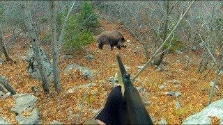 Охота на кабана с нарезным оружием - TAKHO 308 Win / Красивые набеги кабанов на номер