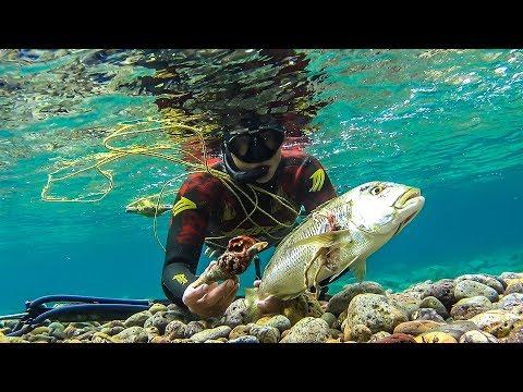 ΨΑΡΟΝΤΟΥΦΕΚΟ ΟΠΩΣ ΘΑ ΕΠΡΕΠΕ ΝΑ ΕΙΝΑΙ |Spearfishing Life 🇬🇷  ✅