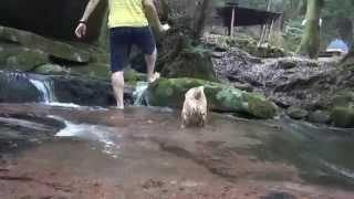 愛媛県成川渓谷です。 どんなに暑い日でも28度の涼しい場所。 水遊び...