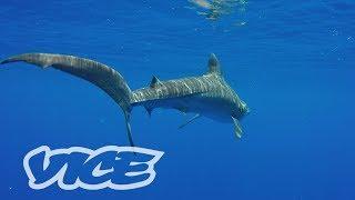 [VICE on AbemaTV] PEST KINGDOM: SHARK HUNTERS PART.1 Trailer
