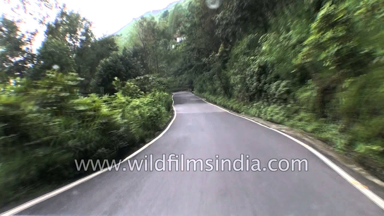 Driving from Rohini entry gate to Rohini tea garden and village, Darjeeling