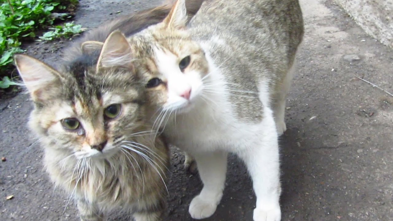 Cats cuddle each other on the street