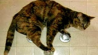 You WON'T HOLD YOUR LAUGH while watching these ANIMAL FAILS - Best CAT and DOG CLIPS! thumbnail