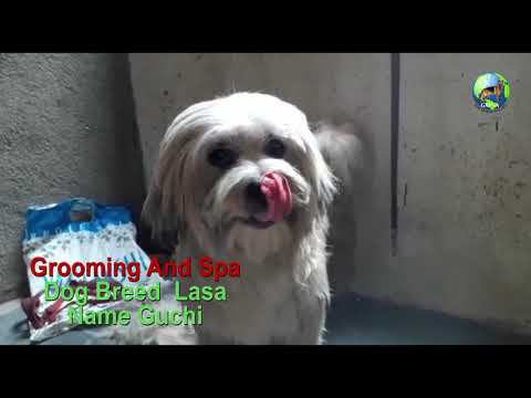 Breed Lasa Grooming and Spa Part - 2