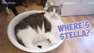 Boo Year 2 # 198 - Stella's New Favorite Place, Whole Earth Dry Cat Food, New Crunchie Plates