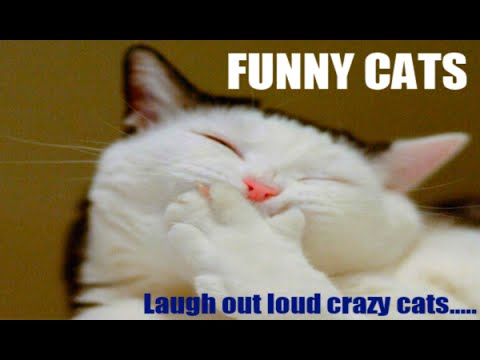 Funny Cat Video – Best of Vine Mashup, Funny Cats Compilation & Cute Cats