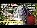 Masteran Konin Nembak Cilbek Sambung Belalang Emas  Mp3 - Mp4 Download