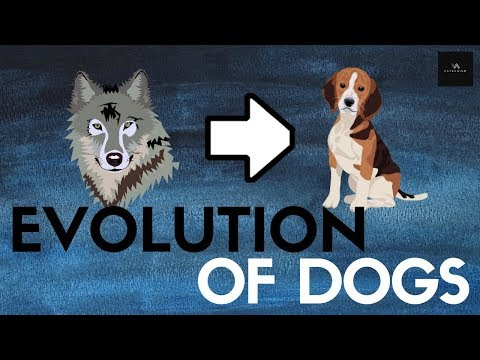 How Your Dog Descended From Wolves Around 36,000 Years Ago.... We Think...