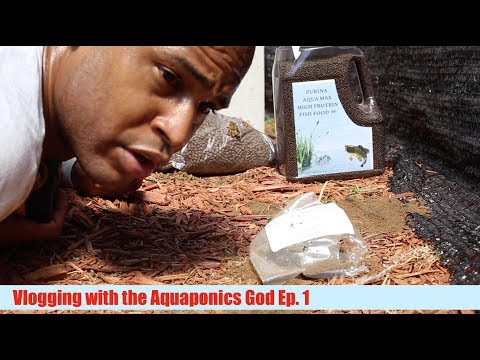 Fish Feed destroyed & New Aquaponics Book | Vlogging With The Aquaponics God Ep.1