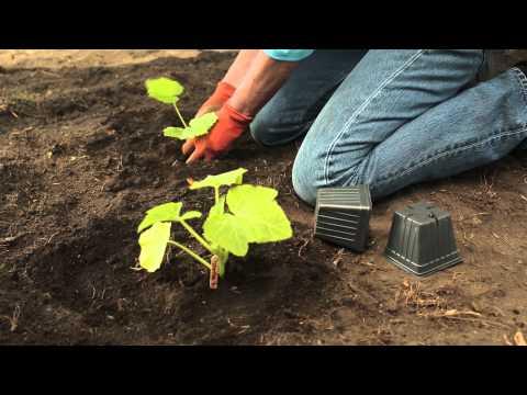 Tips For Gardening In Zone
