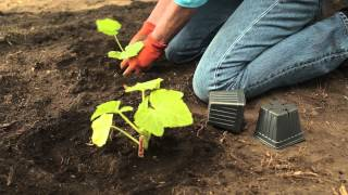 5 Tips For Gardening In Zone 7  | Troy-Bilt®