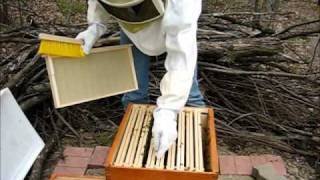 Backyard Beekeeping Part 4(S1:E4): Ensuring Queen Released