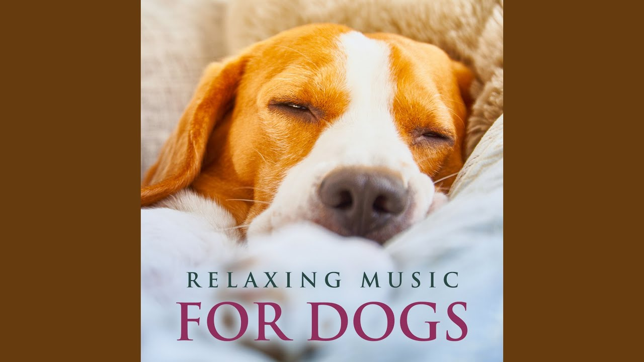 Music for Pets and Animals