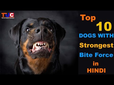 Top 10 Dogs With Strongest Bite Force : TUC  :The Ultimate Channel