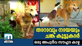 Strange Friendship Between Dog And Duck| Mathrubhumi News