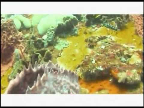 Natural Wonders of the Caribbean (2005) - Coral Reefs