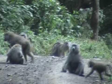 Animal spotting in Arusha National Park