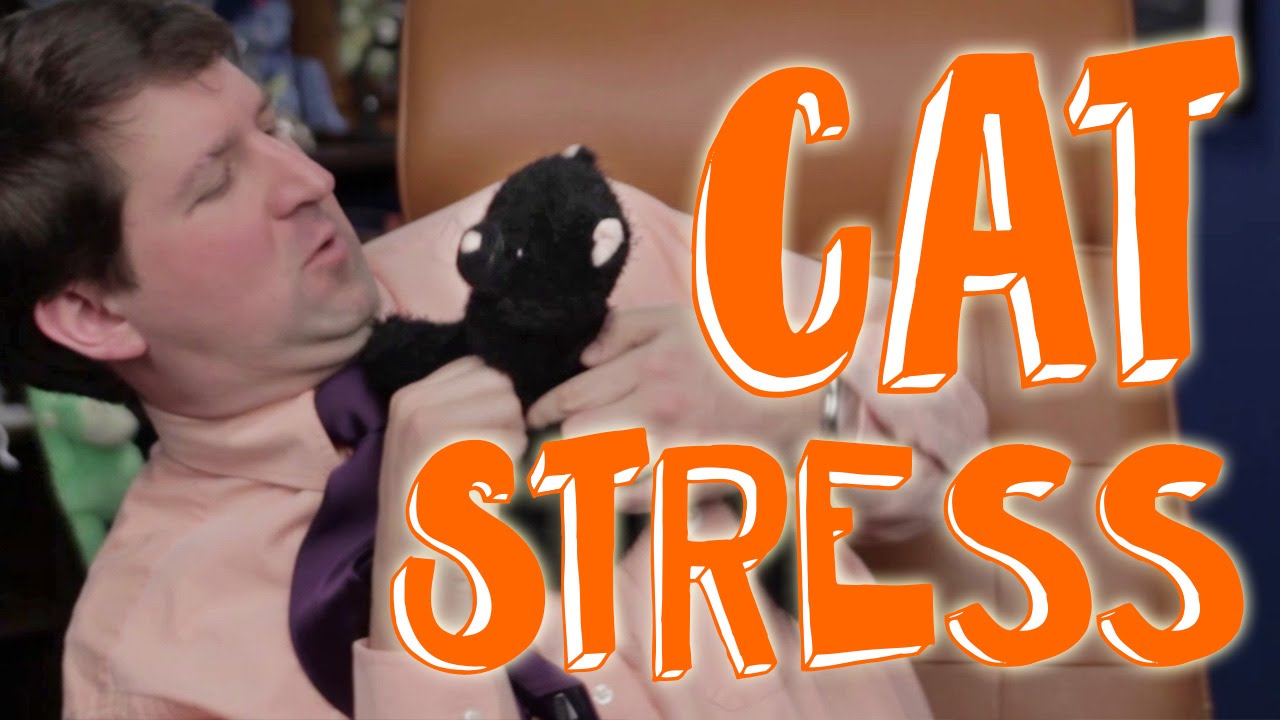 cat health is your cat stressed out