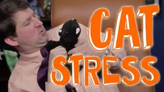 5 Simple Steps You Need for a Stress-free Cat
